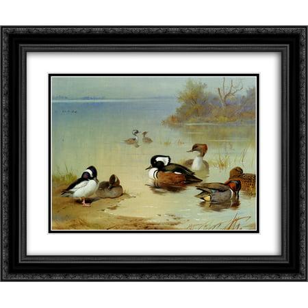 Green Teal Duck (Archibald Thorburn 2x Matted 24x20 Black Ornate Framed Art Print 'Buffel Headed Duck American Green Winged Teal And Hooded Merganser' )