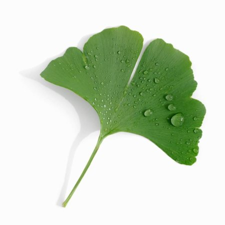 Alexander Wall (A Ginkgo Leaf with Drops of Water Print Wall Art By Alexander Feig )