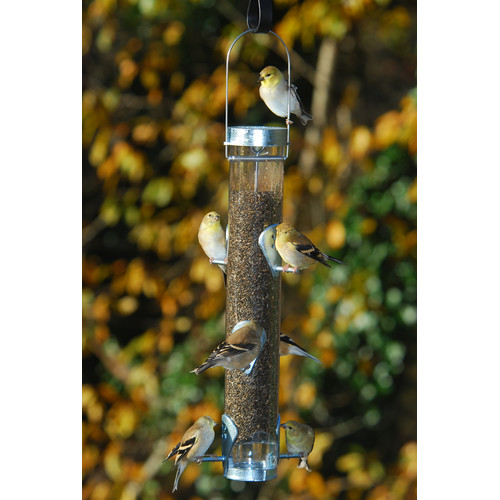 Droll Yankees Classic Finch Tube Bird Feeder