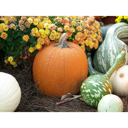 LAMINATED POSTER Halloween Autumn Gourds Flowers Pumpkin Hay Fall Poster Print 24 x 36 - Halloween Painted Gourds Ideas