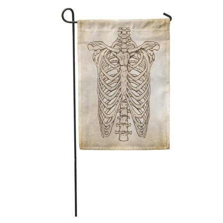 LADDKE Sketch Line Anatomically Correct Human Ribcage Da Vinci Sketches Over Aged Anatomy Garden Flag Decorative Flag House Banner 12x18 inch