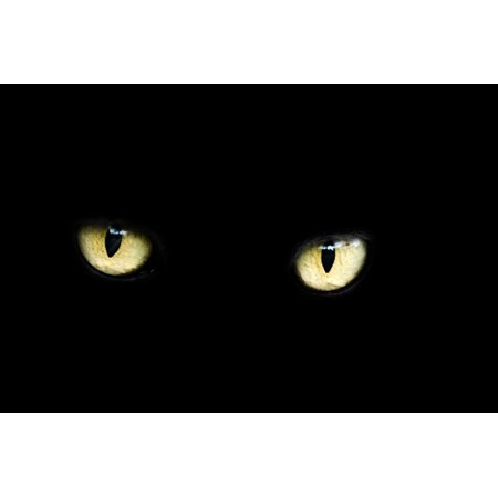 LAMINATED POSTER Dark Bad Black Luck Eyes Halloween Animal Cat Poster Print 24 x 36 - Black Cat On Halloween Bad Luck