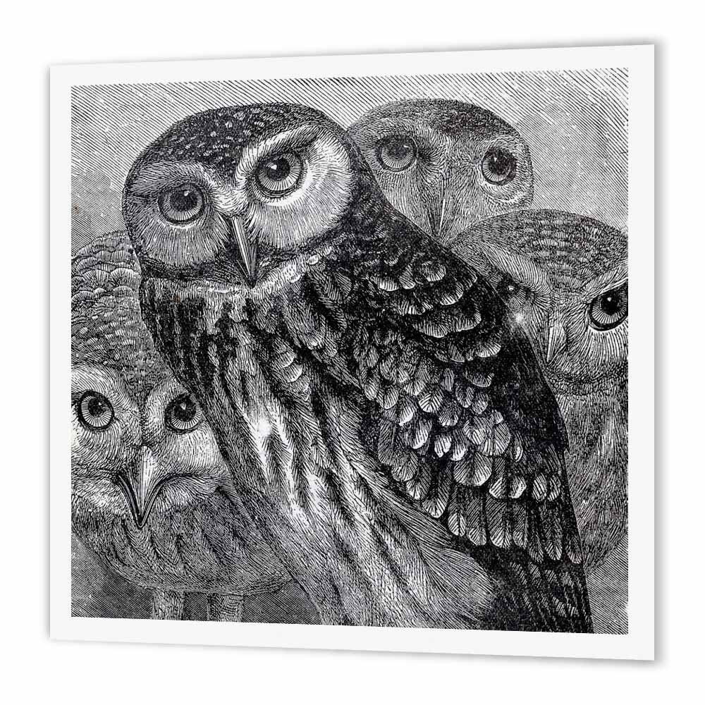 3dRose Group of Four Owls - black and white owl engraving etching - detailed fine art birds - night animals, Iron On Heat Transfer, 10 by 10-inch, For White Material