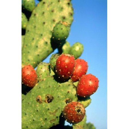 Cactus, San Miguel De Allende, Guanajuato, Mexico Print Wall Art By Marco