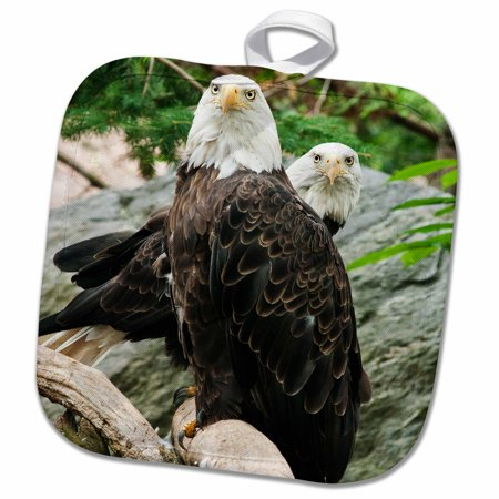 3dRose two eagles - Pot Holder, 8 by 8-inch