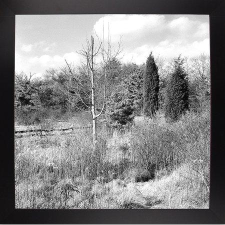 "Single Bare Tree-HARLAN74166 Print 20""x20"" by Harold Silverman - Landscapes in a Affordable Black Large"