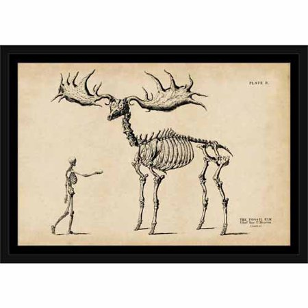 - Vintage Engraving Elk Skeleton Contemporary Modern Trendy Painting Tan & Black, Framed Canvas Art by Pied Piper Creative