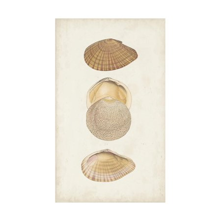 Antiquarian Shell Study I Print Wall Art By Vision Studio
