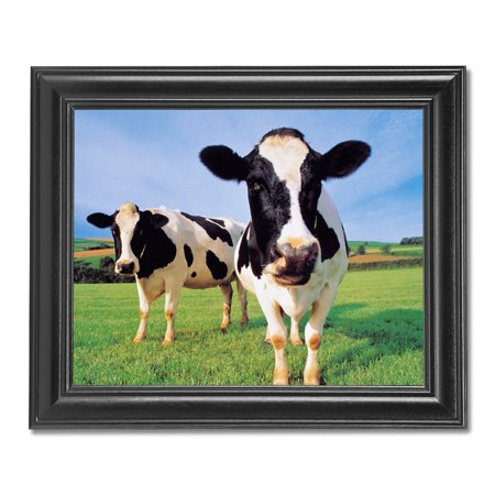 Two Holstein Cows Standing in Grass Farm Photo Wall Picture Black Framed (Cow Picture Frame)