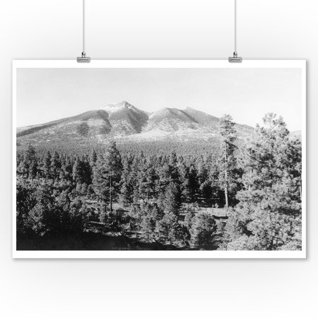 Flagstaff, Arizona - View of San Francisco Peak (9x12 Art Print, Wall Decor Travel Poster) ()