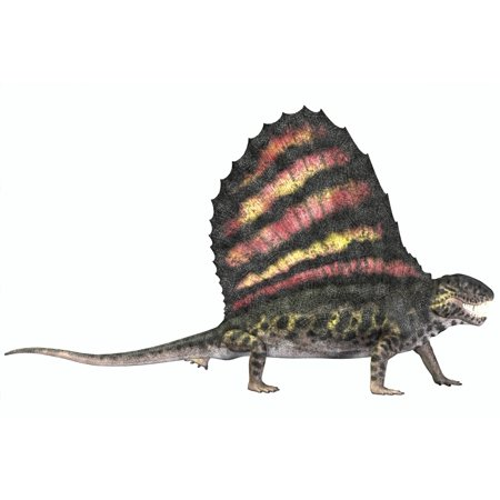 Dimetrodon Reptile From The Permian Period Canvas Art   Corey Fordstocktrek Images  18 X 12