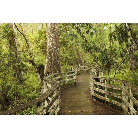 Boardwalk through swamp and Bald Cypress, Audubon Corkscrew Swamp Sanctuary, Florida. Print Wall Art By Adam Jones