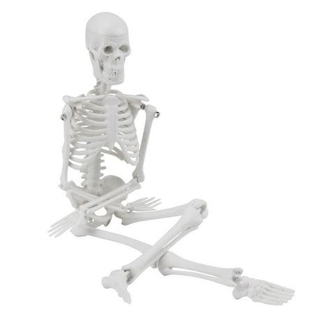 Lv. life Anatomical Skeleton Model,Human Anatomical Skeleton Model w/ STAND for Doctor/Student