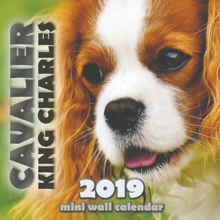 Cavalier King Charles 2019 Mini Wall Calendar (Paperback)