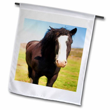3dRose A Beautiful Black and White Horse Standing on a Green Field of Grass Close Up with White on Face - Garden Flag, 12 by - Light Up Horse