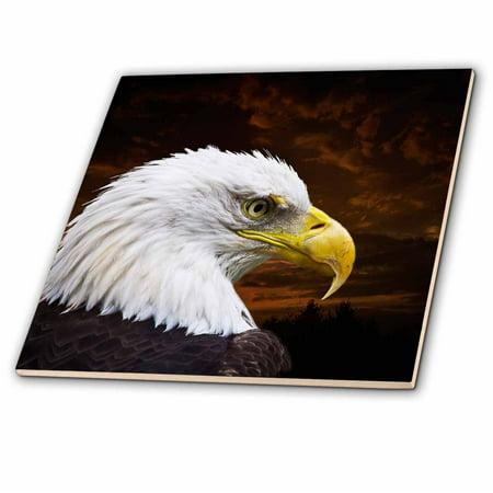 3dRose American Bald Eagle Art Home D�cor and Art - Glass Tile, (American Art Tile)