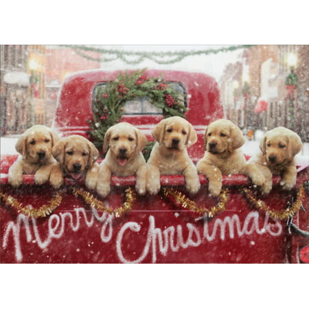 Avanti Press Lab Puppies In Red Truck Box of 10 Dog Christmas Cards ()