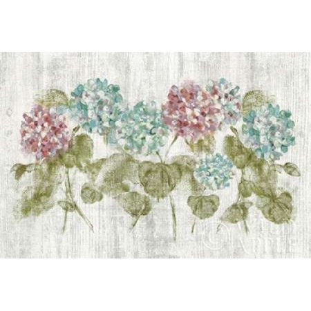 Vibrant Row of Hydrangea on Wood Poster Print by  Cheri Blum