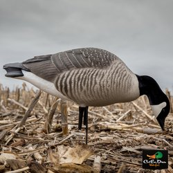 AVERY OUTDOORS GHG HUNTER SERIES LESSER CANADA GOOSE DECOYS - FEEDER PACK