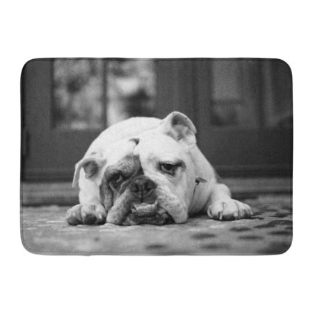 GODPOK Best Black Old Portrait of English Bulldog with Sad Face Laying Down White Adorable Big Rug Doormat Bath Mat 23.6x15.7 (Best Bath Mats For Elderly)