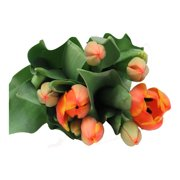 Red Tulips, 7 stems