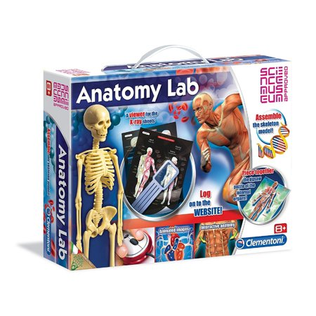 Clementoni Anatomy Lab Assemble The Skeleton Model Walmart