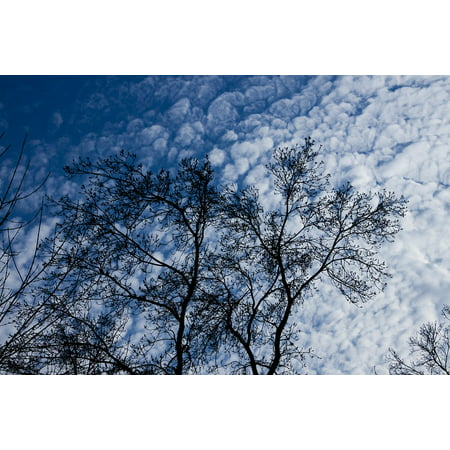 LAMINATED POSTER Tree Blue Forest Nature Branch Sky Cloud Leaves Poster Print 24 x 36