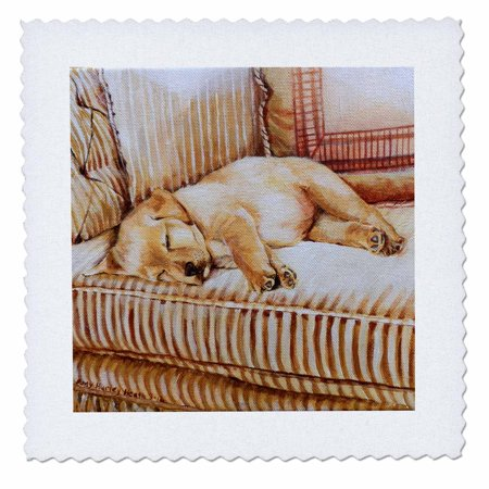 3dRose Little Yellow Lab Puppy Sleeping In The Sun On A Golden Striped Couch - Quilt Square, 10 by (Best Sleeping Pad For Quilt)