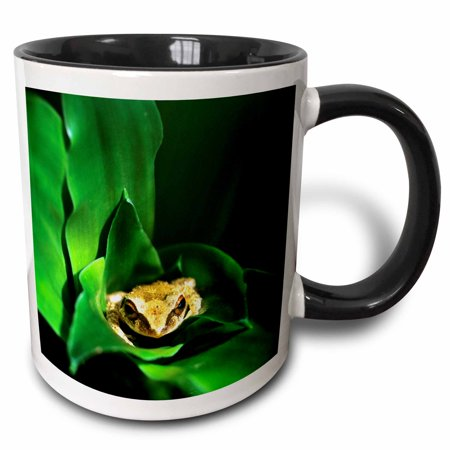 3dRose Coqui Frog in Puerto Rico-CA11 DFR0000 - David R. Frazier - Two Tone Black Mug, 11-ounce