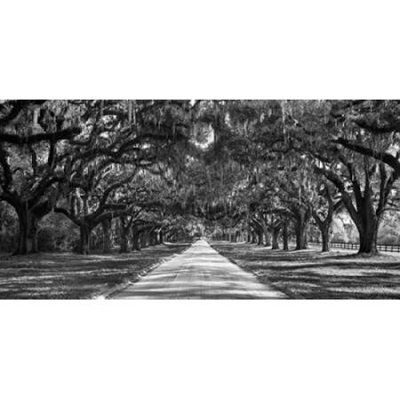 Tree lined plantation entrance South Carolina Canvas Art - Anonymous (10 x 20)