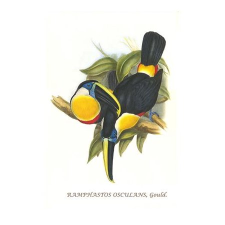 Hybrid Toucan-Fine Art Canvas Print (20