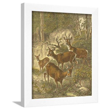 Small Roe Deer (Small Roe Deer Framed Print Wall Art By Friedrich Specht)
