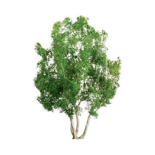 "Pro Tree, Snow Gum 3"" (2) Multi-Colored"