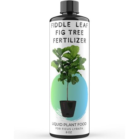 Fiddle Leaf Fig Tree Fertilizer | Ficus Lyrata Liquid Plant Food | Live Indoor Potted House and Office Plants Treatment Formula for Healthy Leaves Roots Branches | 8oz concentrate makes 6 gallons