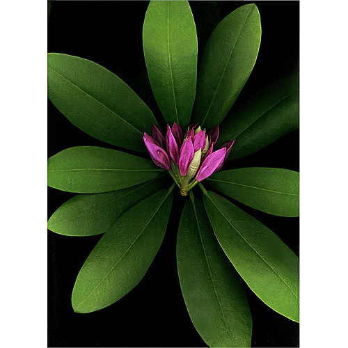"Trademark Art ""Botanical"" Canvas Art by Preston"