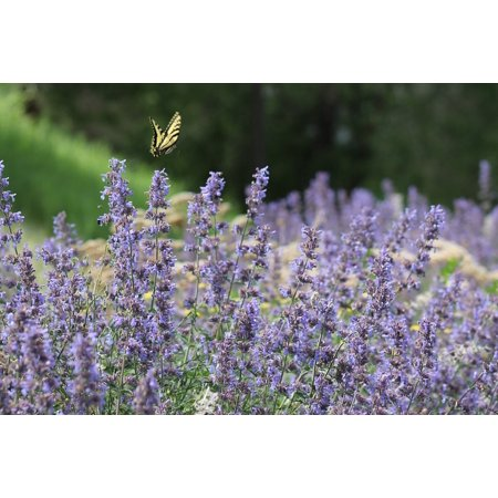 LAMINATED POSTER Flower Flowers Butterfly Purple Lavender Insect Poster Print 24 x 36