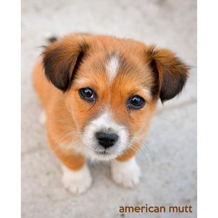 American Mutt : A Gift Journal for People Who Love Dogs: American Mutt Puppy - Pointing Dog Journal