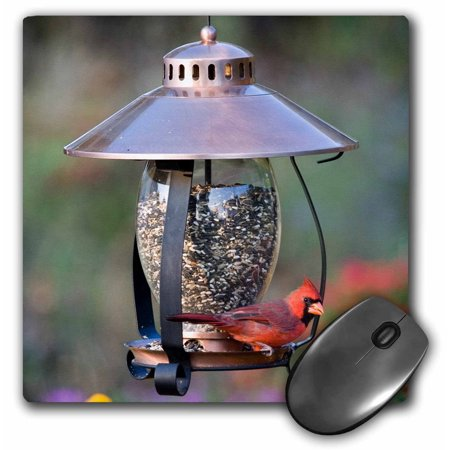 3dRose Northern Cardinal on copper lantern hopper bird feeder, Marion Co. IL - Mouse Pad, 8 by 8-inch