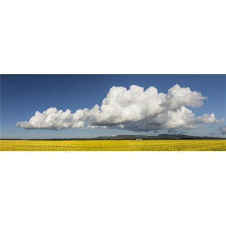 Posterazzi DPI12273011 Canola Field with Blue Sky & Cloud - Thunder Bay Ontario Canada Poster Print - 37 x 12 in. - image 1 of 1