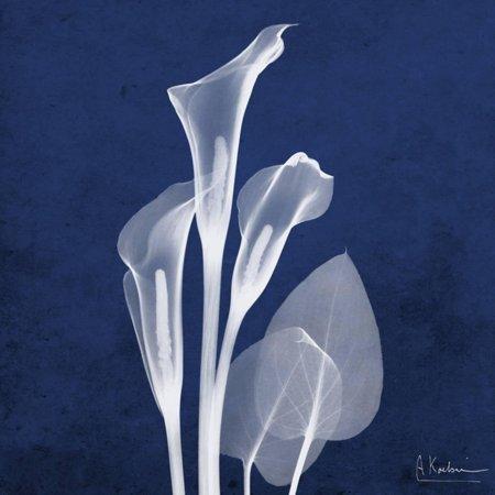Three Indigo Calla Lilies Blue Flower Lily X-Ray Photo Print Wall Art By Albert Koetsier