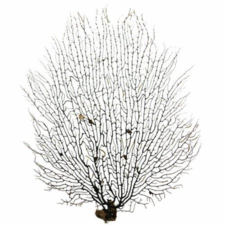 Breakwater Bay Hopper Natural Sea Fan