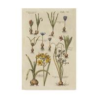 Trademark Fine Art 'Vintage Florilegium II' Canvas Art by Wild Apple Portfolio