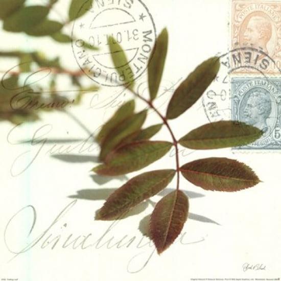 Trailing Leaf Poster Print by Deborah Schenck (12 x 12)