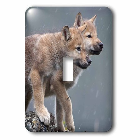 3dRose Gray wolf Canis lupus pups in snow Montana Single Toggle Switch