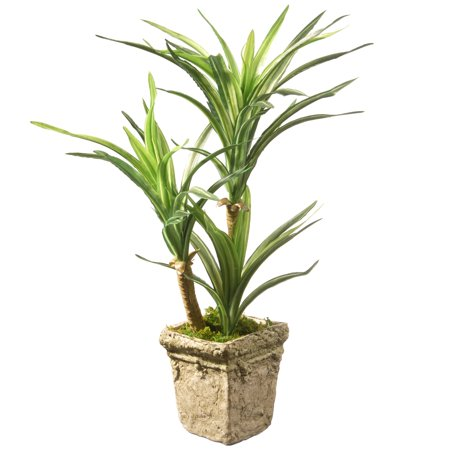 Green Yucca Plant (14