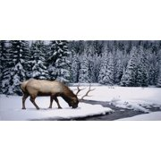 Elk In The Snow Photo License Plate Free Personalization on this plate