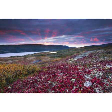 Sunset over fall colors at Wonder Lake Denali National Park & Preserve Alaska Stretched Canvas - Carl Johnson  Design Pics (19 x 12) ()