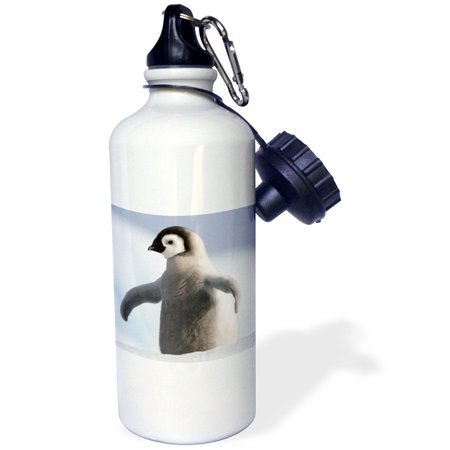 Penguin Bottle - 3dRose Baby Penguin, Sports Water Bottle, 21oz