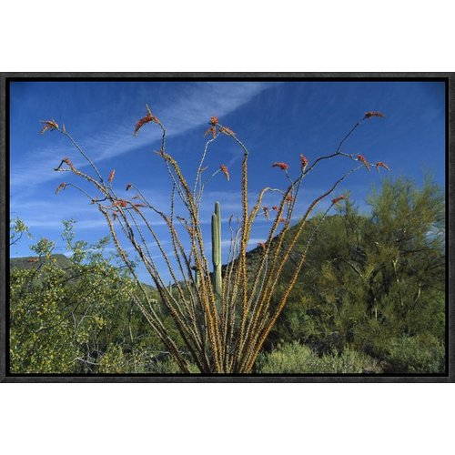 East Urban Home 'Ocotillo Saguaro Greasewood and Palo Verde Arizona ' Framed Photographic Print on Canvas