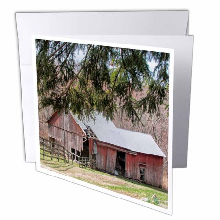 3dRose old red barn under the tree, Greeting Cards, 6 x 6 inches, set of 12 ()